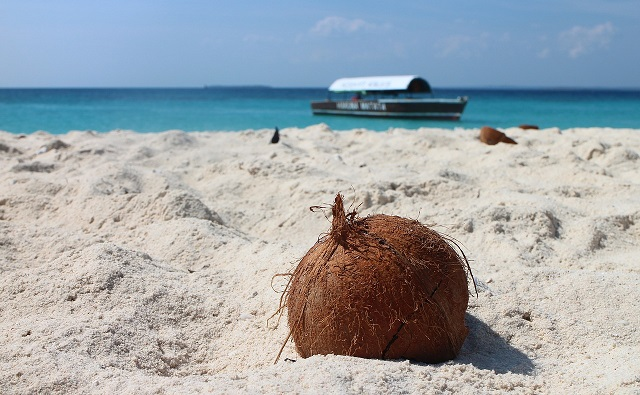 Coconut_in_sand.jpg