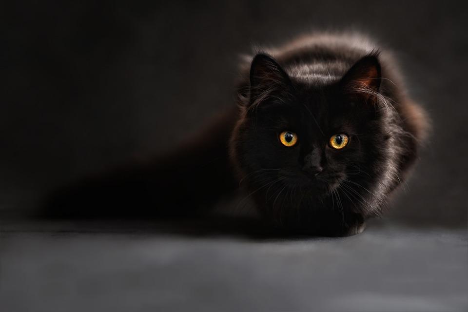 cat-694730_960_720.jpg